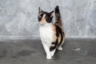 slepa maca