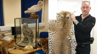 Leopard skins, cheetah skull and snowy owl traded illegally