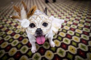 سگی در شانزدهمین مراسم سالانه مد حیوانات خانگی در نیویورک