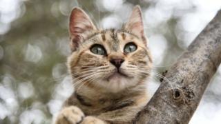 A cat sat on a tree branch