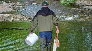 , 'Significant fish kill' in Glenavy River, County Antrim