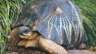 File photograph of the stolen tortoise