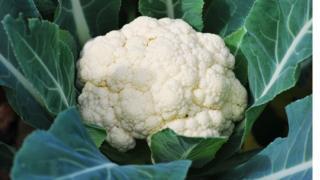 A cauliflower in a field