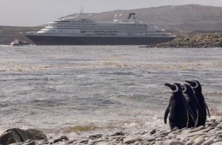 เพนกวินที่หมู่เกาะฟอล์กแลนด์