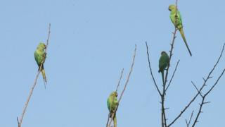Parrots in a tree