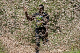 A man runs through a desert locust swarm