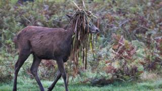 A deer in Bushy Park, south-west London