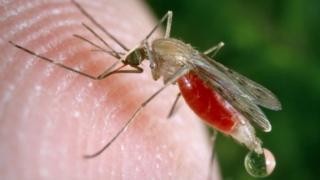 Umubu utera malaria