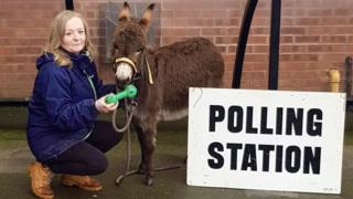 Isla the donkey gets into the festive electioneering in Broughton Astley