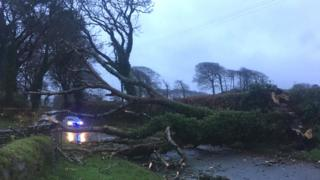 Fallen tree across the road at Cresswell Quay