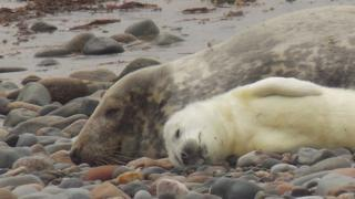 Record sightings of whales, dolphins and seals in UK, says Wildlife Trusts