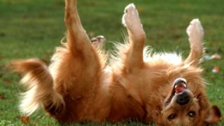 Собака катается по траве