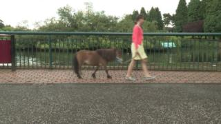 Truffles came to the public's attention when he was spotted being walked on a lead through Ballymena