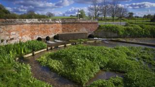 Ферма по выращиванию водяного кресса