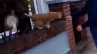 Video still of a cat on a wall