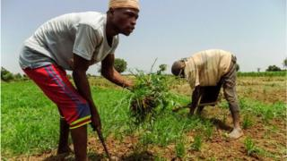 Why Nigeria has restricted food imports