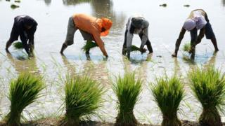 किसान, एमएसपी, न्यूनतम समर्थन मूल्य, स्टेट एडवाइज्ड प्राइस, एसएपी, राज्य परामर्श मूल्य, कृषि लागत और मूल्य आयो, सीएसीपी