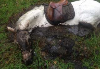 Horse stuck in peat bog