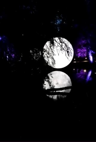 moon at Enchanted Forest