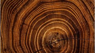 Dendrochronology.