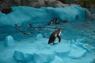 pingvini beograd pingvinarijum
