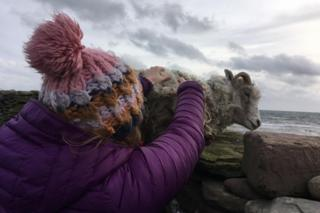 Sian lifts a sheep on to the wall