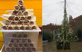 Sausage roll tree and the tree outside Cromer Museum