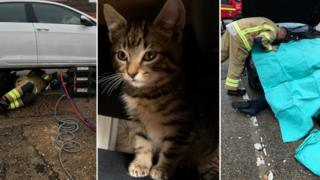 Cars being dismantled with a picture of the rescued cat.