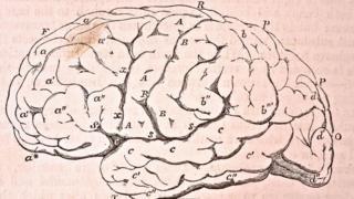رسم للمخ