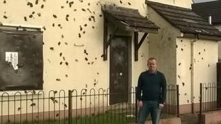 'Muck bombs' at houses and cars in Hazelbank