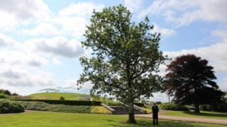 Llanarthne Tree