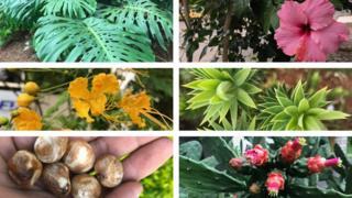 Mosaico com plantas com partes comestíveis