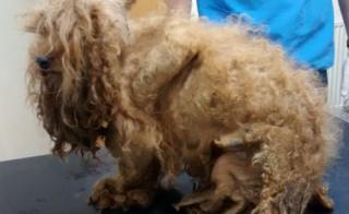 Matted dog Benji
