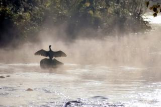 A bird on a rock in misty weather