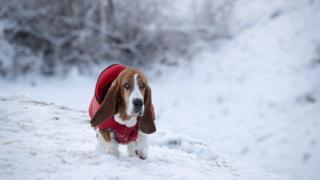 Пес в красной попонке на снегу