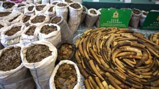 香港海關官員稱,他們在集裝箱內查獲了約8300公斤穿山甲鱗片和2100公斤象牙