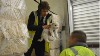 puppy being lifted out by RSPCA inspectors