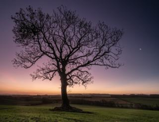 Tree silhouette in the Scottish Borders
