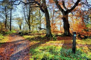 Polkemmet Country Park, Whitburn