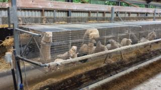 Fur farm cages at Aarhus University, Denmark