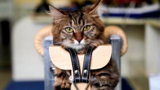 实际上,几十年前给宠物做针灸就已经出现了,但是没有被普遍使用。