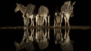 A herd of zebra near a waterhole