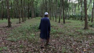 A picture of a Thai Muslim villager walking in a rubber plantation