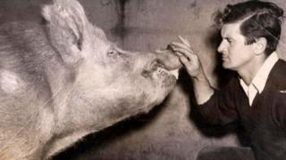King-Smith with a pig on his farm