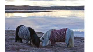 Ponies in blankets