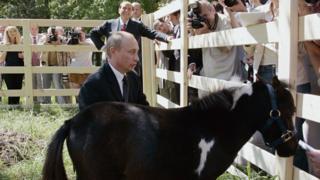 Путин и пони Вадик