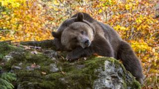"""Биржевые """"медведи"""" ждут своего часа"""