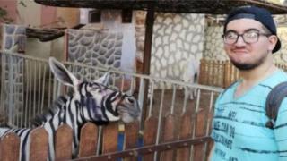 Студент в парке Каира рядом с зеброй, больше похожей на осла
