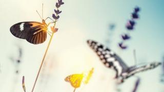 Бабочки - собирательный образ