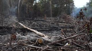 اتش در جنگل های آمازون همچنان شعله ور است